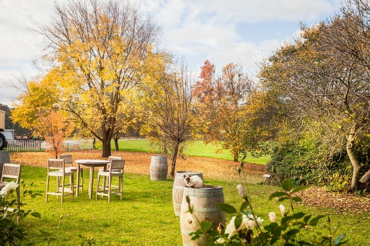 Autumn Colour @ Chateau Dore Winery with our bar tables and chairs and wine barrells
