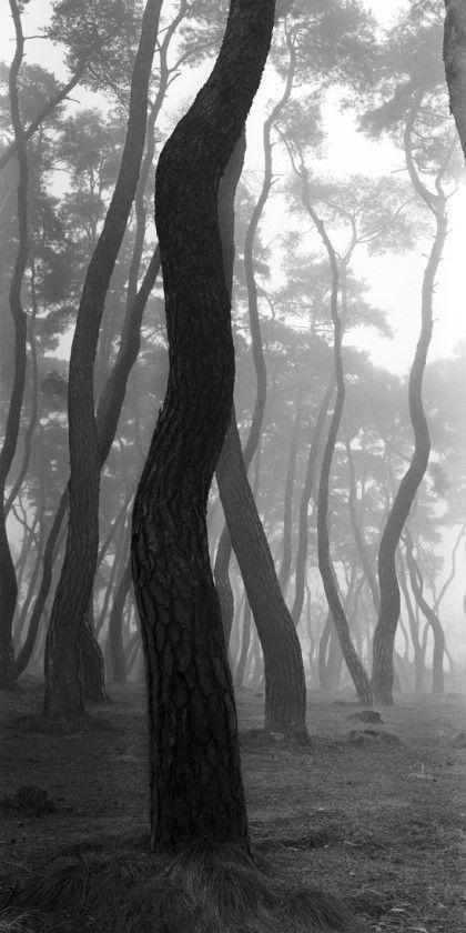 [사진작가] 배병우 (1950~ ) - 한국의 미, 소나무 : 네이버 블로그