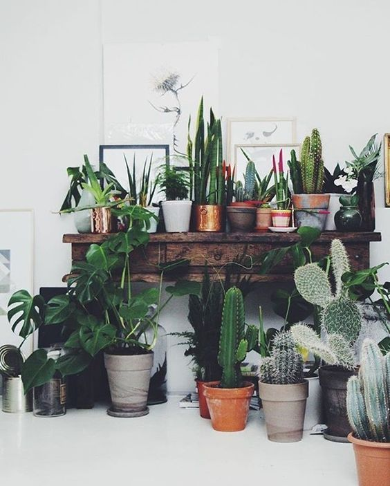 Weu0027re Loving The Interiors Trend Of House Plants   From Concrete Planters,  Cacti, Basket Pots, Hanging Plants, Palms And So Much Green For Your Home.