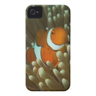Everyone loves nemo. This appealing iphone4 case has a photo of a cute and playful clownfish. This particular clown fish was photographed on Lighthouse Bommie on Australia's Great Barrier Reef. .