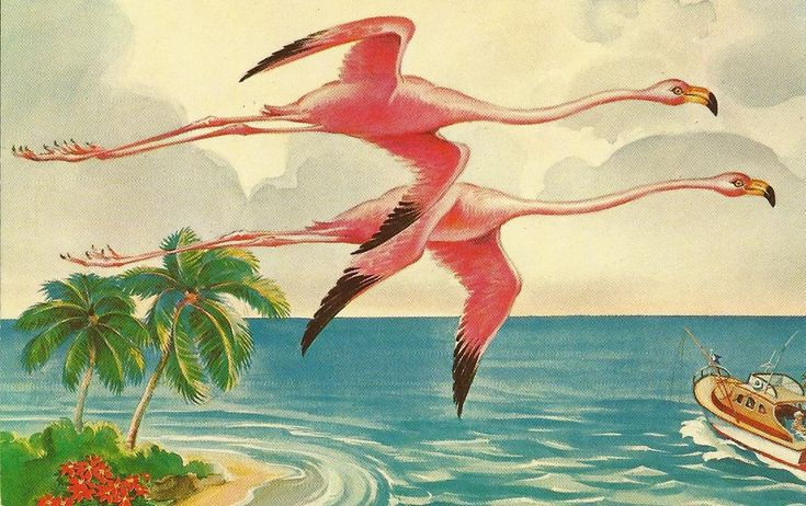 Vintage postcard.  Pink flamingos in flight