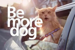 Why creatives should be more cat - Emily Hague at McGrath Rainey Laird Agency | MRLA
