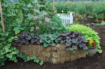 A garden grown in a straw bale--awesome idea!