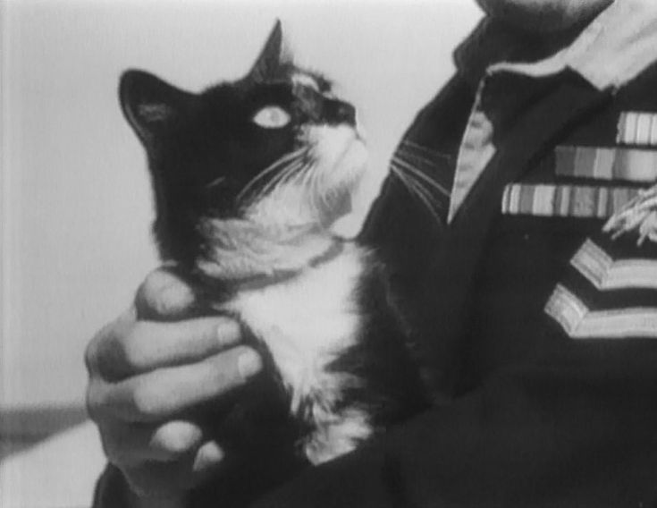 November 1, 1949: Able Seacat Simon being held by an Amethyst crewman after arriving at Devonport, England.