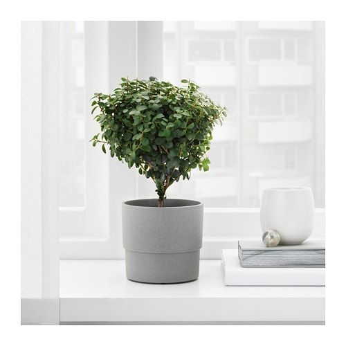 Ikea Nypon Indooroutdoor Gray Plant Pot For The Home In