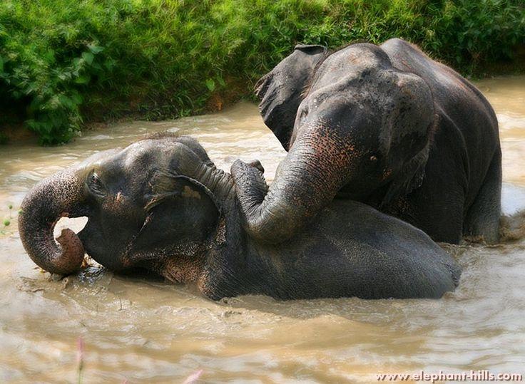 Khao Sok National Park, Elephant Hills Elephant Experience