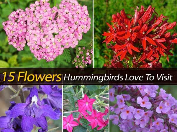 Hummingbirds are wonderful additions to the garden. If you want to attract hummingbirds, you can put a hummingbird feeder. But, there are also plants you can grow with flowers hummingbirds love. Check out the link below for 15 colorful flowers hummingbirds love to visit. Hummingbird Plants Image: source Protect Your Family From Toxic Products and …