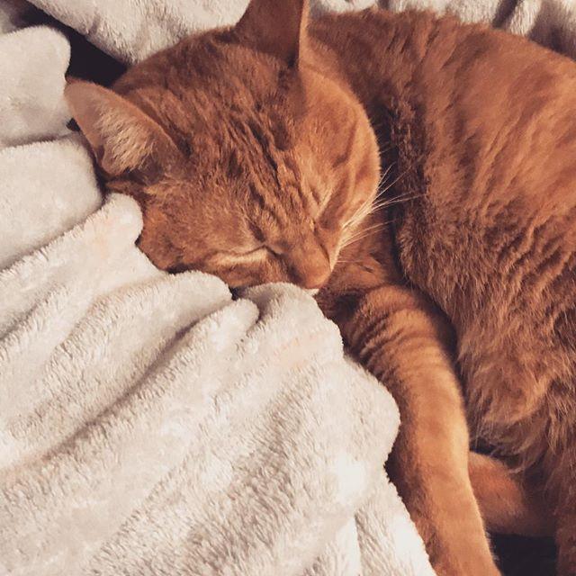 . 我が家の猫様は 甘えんぼです。 可愛い❤️ . ちなみに私は 猫アレルギー。笑 . . #愛猫 #ジャムくん  #あまえんぼ  #かわいすぎる  #じゅな  #アンダーラウンジ  #歌舞伎町  #カラオケ #ダーツ  #ガールズバー