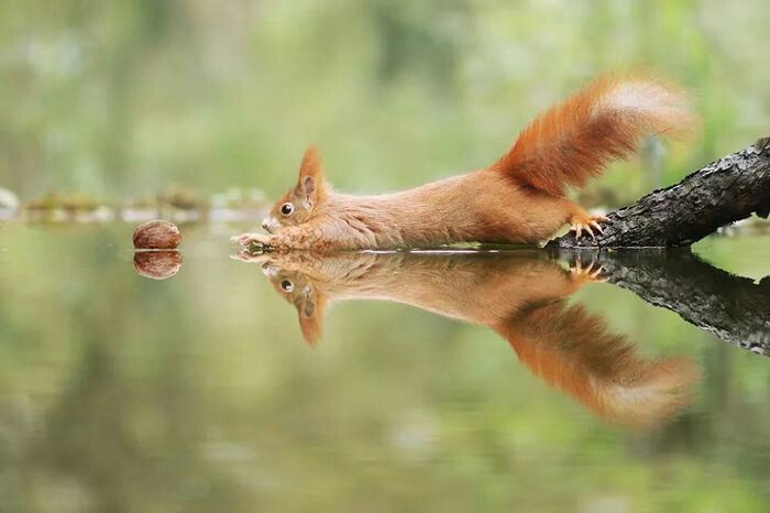 Pin Von Windler Auf Fotos Lustige Tierfotos Tier Fotos Tiere
