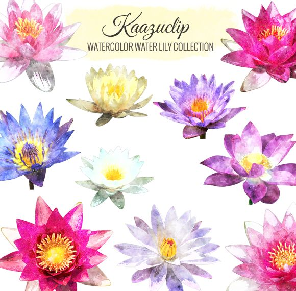 Check out Watercolor Water Lily Collection by Kaazuclip on Creative Market