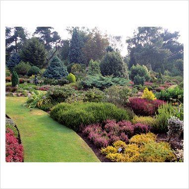 conifer garden design gap