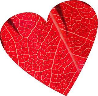 Okazuje się, że cholesterol nie ma większego wpływu na rozwój miażdżycy i nie prowadzi do zawału serca. Wysoki poziom cholesterolu może wręcz wiązać się dłuższym życiem i mniejszym ryzykiem raka. Szkodliwy jest tylko jeden rodzaj LDL, a zbijanie całego cholesterolu statynami może prowadzić do zgonu i nowotworów.