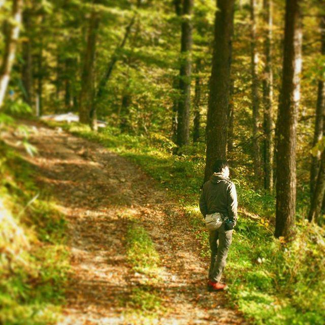 【mozumozu1030】さんのInstagramをピンしています。 《さらっと過去Pic キャンプの朝日を浴びて (2015/11月 #大平 #飯田市 #長野県 #日本 #canon #kissx7i 撮影) #朝日 #朝 #秋 #キャンプ #森 #自撮り 笑#一眼レフ #紅葉 #落葉 #緑 #道 #光 #あぜ道 #自然 #アウトドア #カメラ男子 #Japan #wood #forest #nature #tree #green》