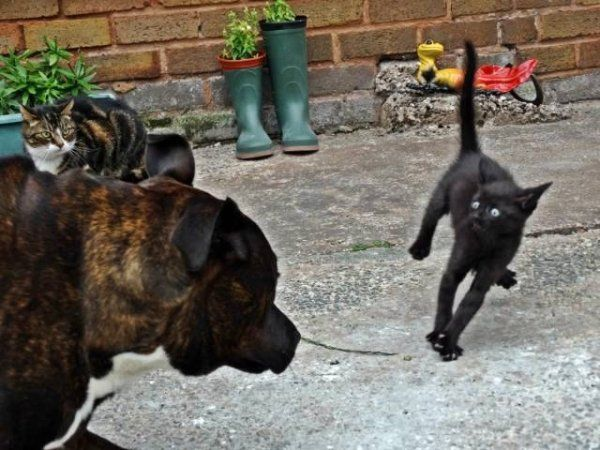 Best Perfectly Timed Photos Images On Pinterest - Photographer proves dogs can fly with funny perfectly timed photos