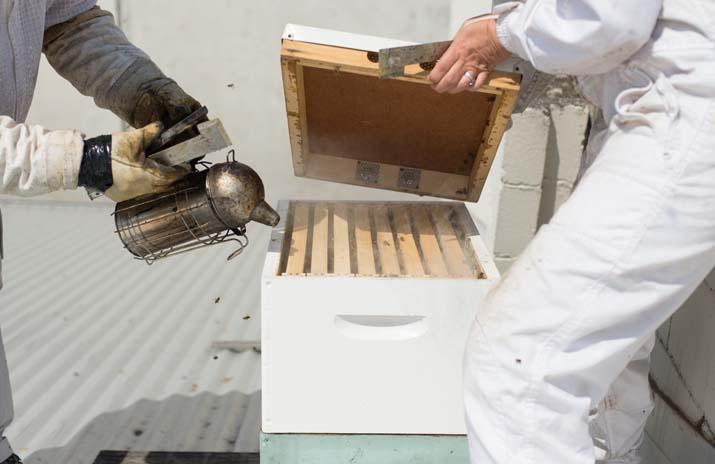 Photo: Justin Emerson  CBD, Trunk - Exhibition St Rooftop Honey - COFFEE SUPREME