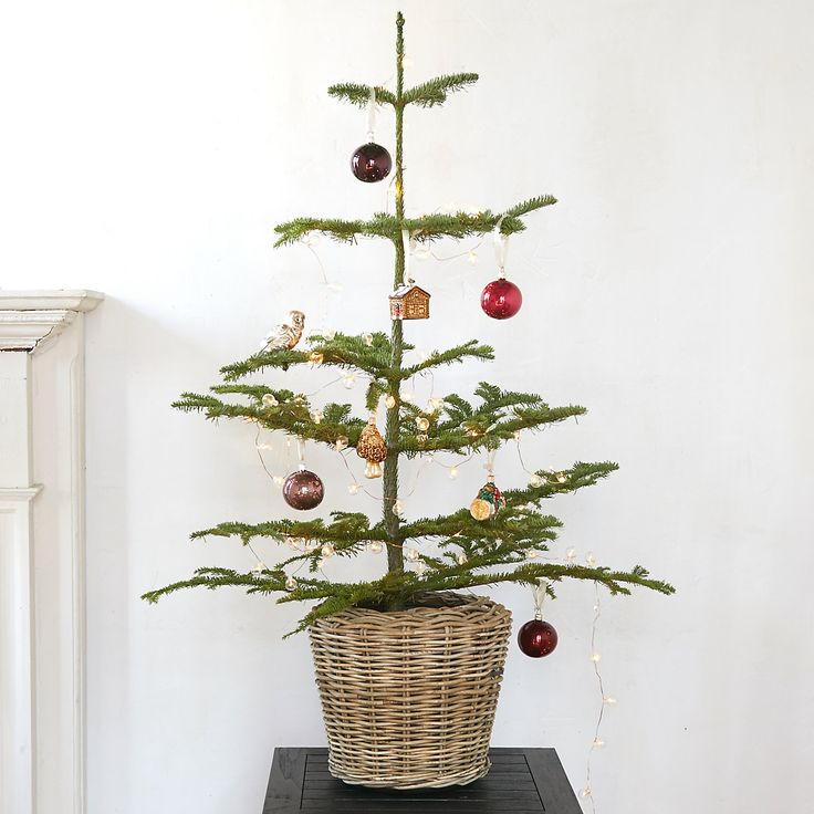 Tabletop Noble Fir in HOLIDAY Fresh Trees at Terrain