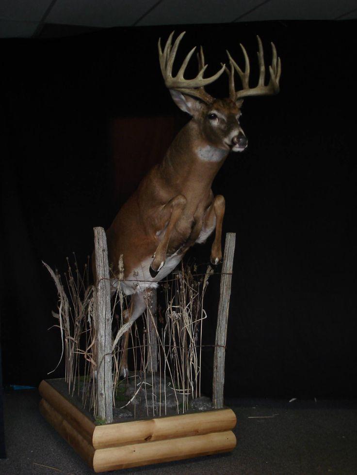 Best 25 Deer Mounts Ideas On Pinterest European Mounts