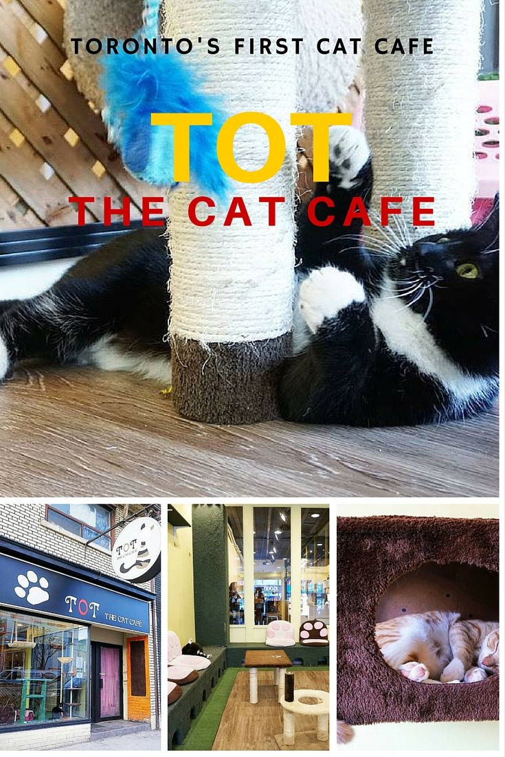 Visiting Toronto  39 s first cat cafe  TOT the Cat Cafe  travel  review  mintnotion