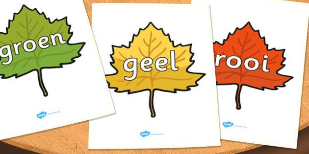 * NEW * Afrikaans Colour Words on Autumn Leaves