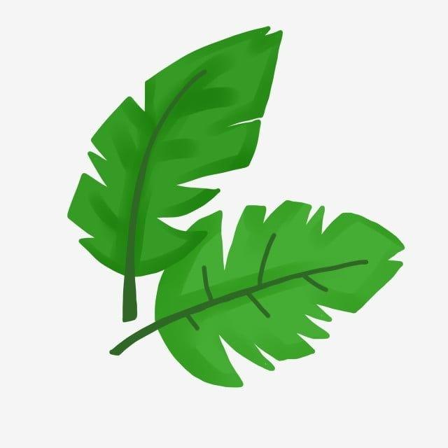 Gambar Daun Daun Hijau Hijau Daun Daun Imut Png Transparan Clipart Dan File Psd Untuk Unduh Gratis Tanaman Hijau Daun Daun Hijau