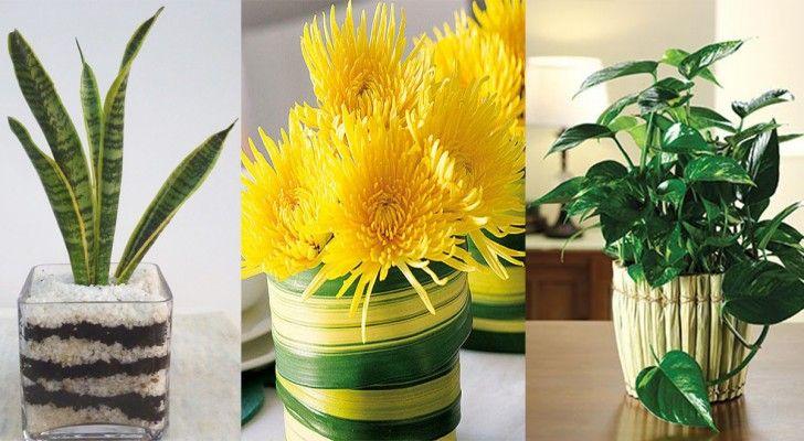 Plantas que purifican el aire y facil de mantener