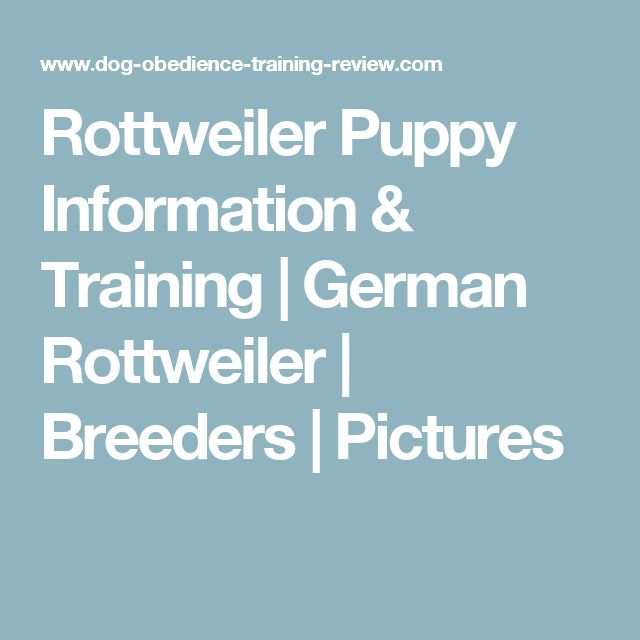Rottweiler Puppy Information & Training | German Rottweiler | Breeders | Pictures