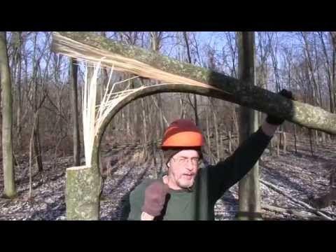 Hinge cutting for deer habitat workshop: 2014 QDMA National Convention - YouTube