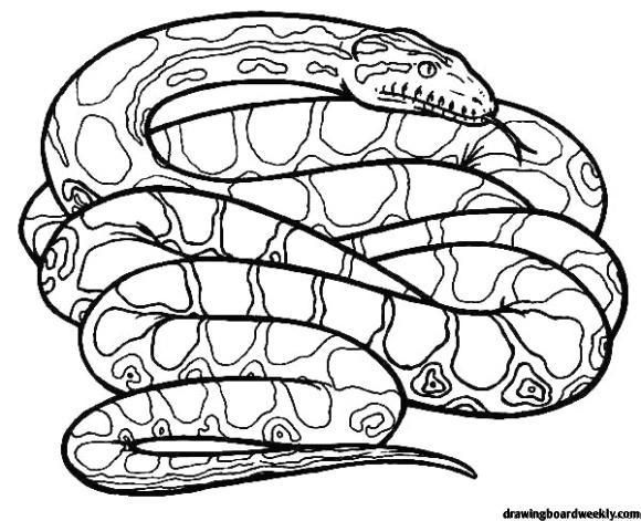 Rattlesnake Coloring Page Snake Coloring Pages Anaconda Snake Coloring Pages