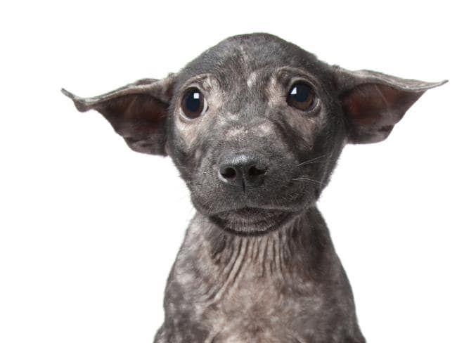 Perth Photographer S Stunning Images Go Viral Cute Animals Baby Animals Animals