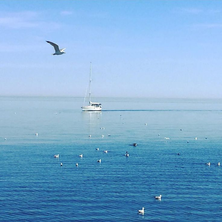 Took advantage of the great weather today and went for a walk along the lakeshore. Lots and lots of seagulls just as many humans (not pictured) and every one in a while a sailboat. I love living so close to the lake  #toronto #thesix #urbanliving #sailboat #segelboot #möwe #seagulls #lakeontario #lake #julesincanada #mimico #lakeshoretoronto by julesjulson