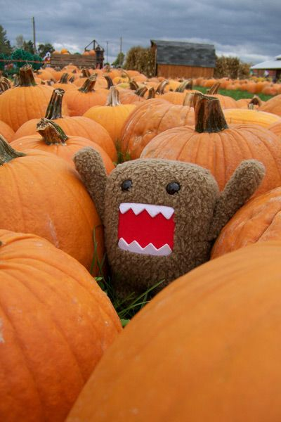 domo hanging out at a pumpkin patch