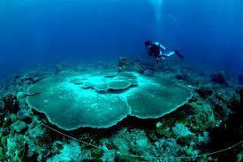 under water of anambas