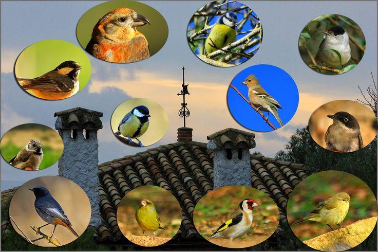 Crónicas Ornitológicas: Aves del Refugio