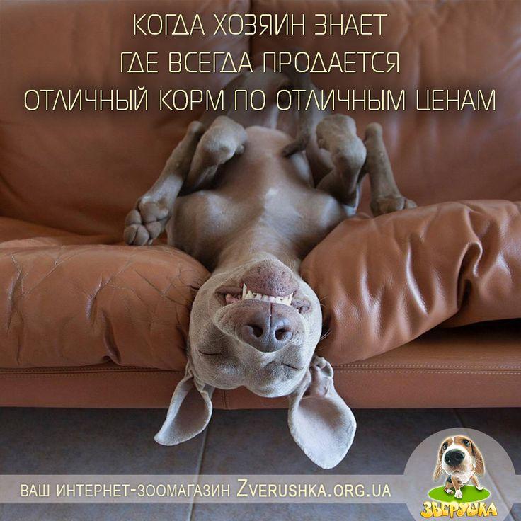 Многие владельцы собак очень тщательно подбирают корм для своих питомцев. И это правильно!  Корма для собак и щенков - https://zverushka.org.ua/korm-dlja-sobak Ежедневные рационы, лечебные диеты, специальные корма.  В нашем зоомагазине Zverushka.org.ua вы всегда найдете только качественные и высококлассные корма для собак, состоящие из полезных ингредиентов и содержащие натуральное мясо, белки, злаки, жиры.  #корм #для_собак #зоомагазин #киев #зоотовары