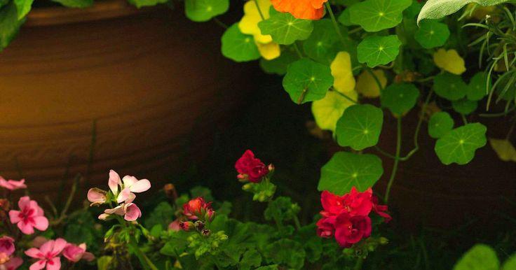 Como pendurar vasos de flores com furos nas laterais. Plantas penduradas são um elemento decorativo para lugares como pátio, ao longo de uma cerca, sobre um deque ou qualquer outra área onde outros tipos de plantas não combinam ou não têm espaço hábil para serem colocadas. Agricultores comerciais oferecem no mercado vasos de flores coloridos para os consumidores com pouco espaço e tempo para planejar ...