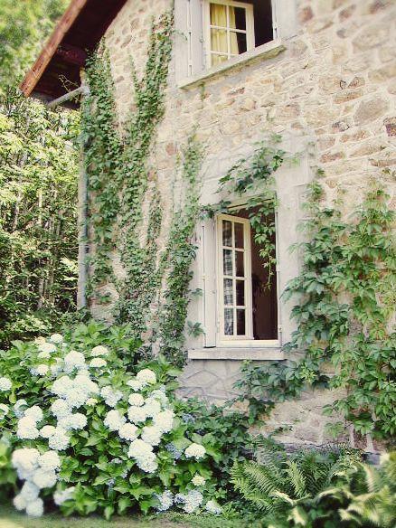 White Hydrangea.  ♥♥♥ re pinned by www.huttonandhutton.co.uk