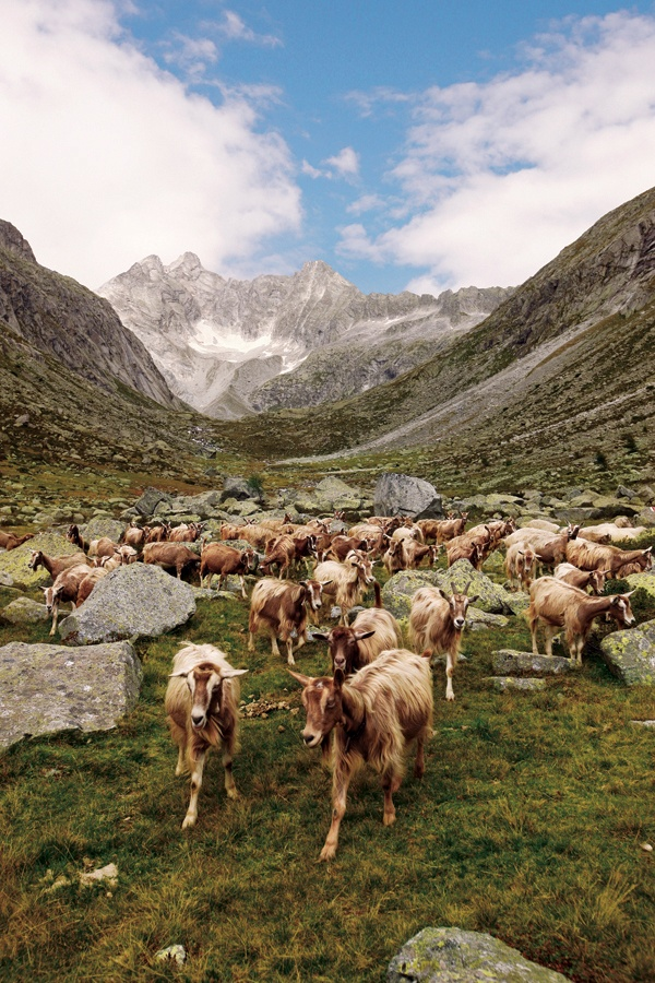 Adamello Nature Park - Alpine pastures  http://lombardiaparchi.proedi.it/parchi-montani/parco-naturale-adamello/?lang=en