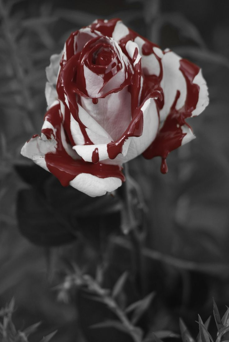 Painted Rose