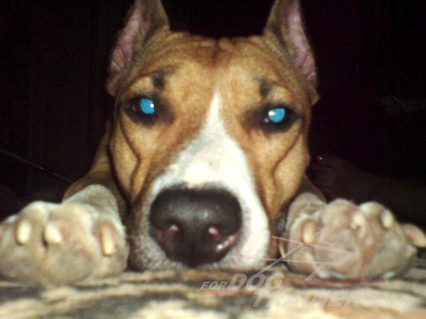 Blue eyes! Dog photo contest!