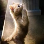Purraying: Pet, Krislyn Cat