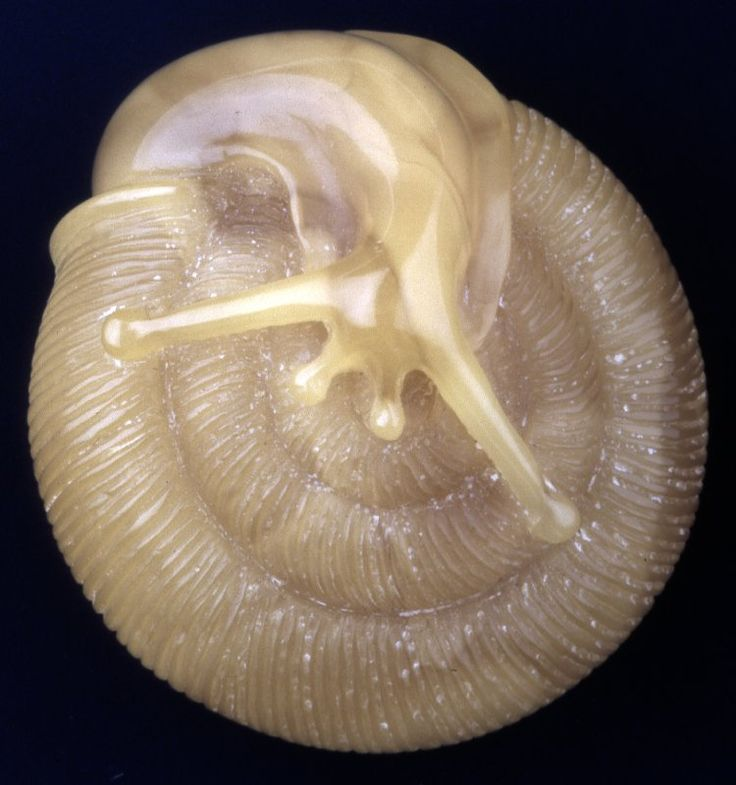 Amber netsuke. Snail. Signed. (From the British Museum) The texture of the snail body from the amber is just amazing.