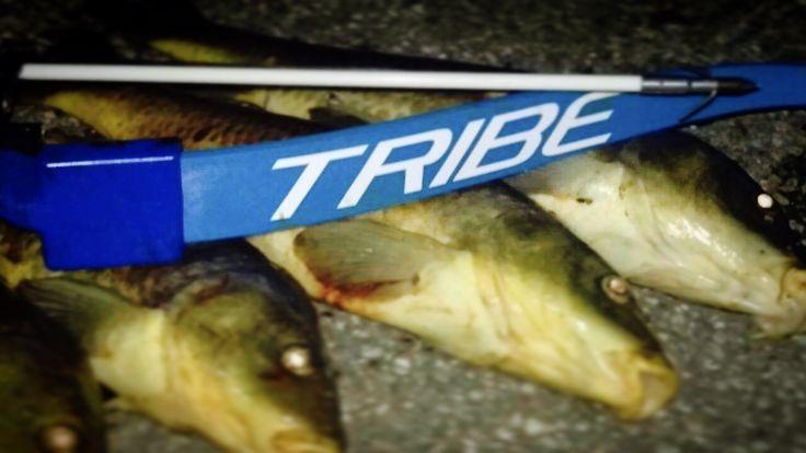 Tribe Triton Pro Bowfishing Bow!  Serious carp killers!  #archery #archeryseason #Bowhunting #hunting #BornToBowhunt #BuiltToWin #TribeBows #Traditional