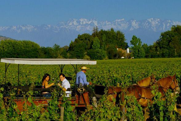 El Valle de Colchagua lanza la Ruta del Vino 2013 - Revista Caras