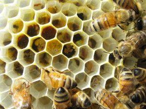 become a nm beekeeper