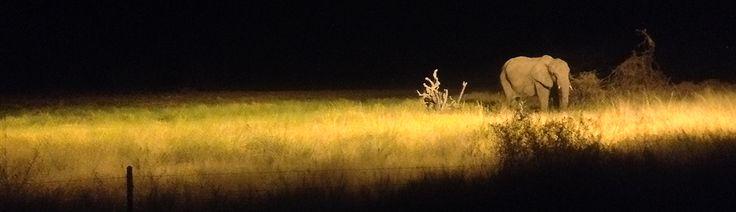 Elephant in the night Safari at the Etosha National Park - Namibia, Africa