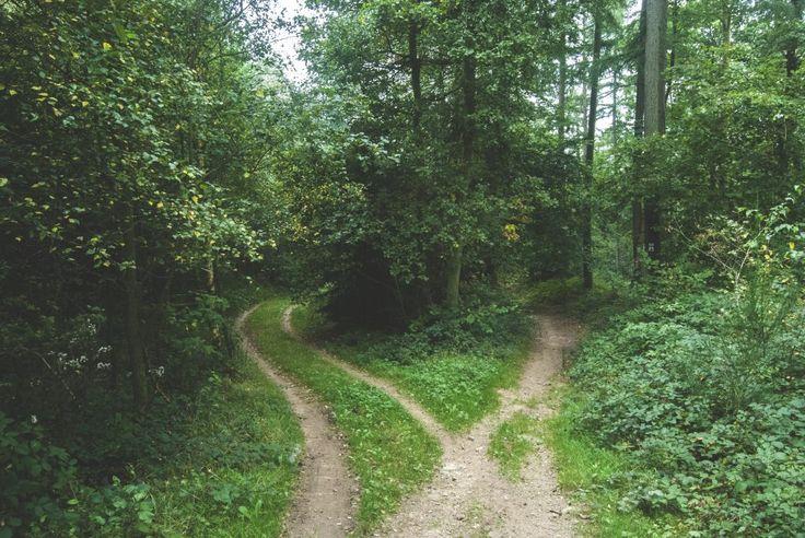 Medytacyjne ćwiczenie w podejmowaniu decyzji | Maciej Wielobób
