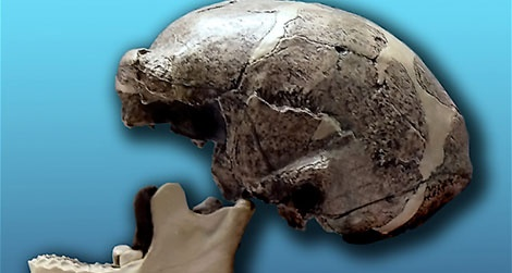 Mysteries of the lost peking man fossils solved?