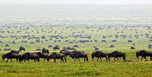 Tanzania Safari – Explore Wildlife Explore Yourself! - Povonte #Kilimanjaro_Climbing, #Tanzania_Group_Tour, #Tanzania_safari