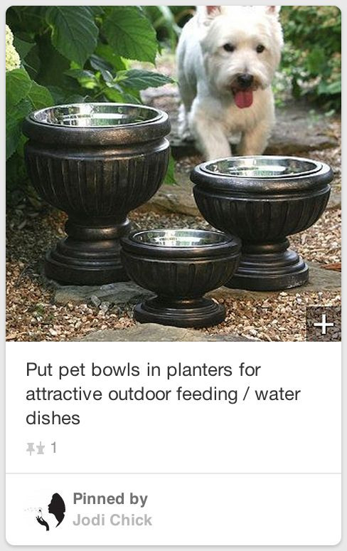 The 25 Best Dog Water Bowls Ideas On Pinterest Cat