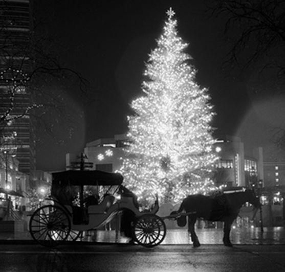 Must Take A Horse-drawn Carriage Ride While In NYC For
